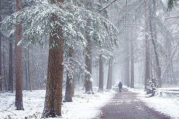La forêt de Zeister dans la neige. Hiver 2021 sur Peter Haastrecht, van