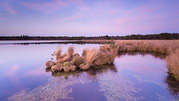 Strabrechtse Heide 285 sur Desh amer