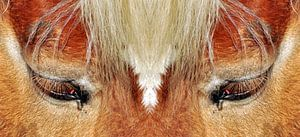 Paardenogen van