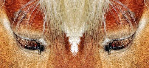Paardenogen