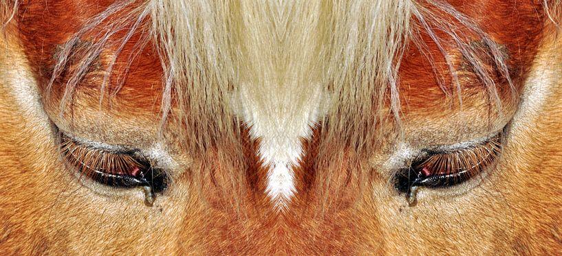 Paardenogen van CreaBrig Fotografie