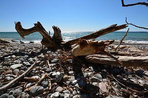 Baumstamm am Strand -  Stubbenkammer