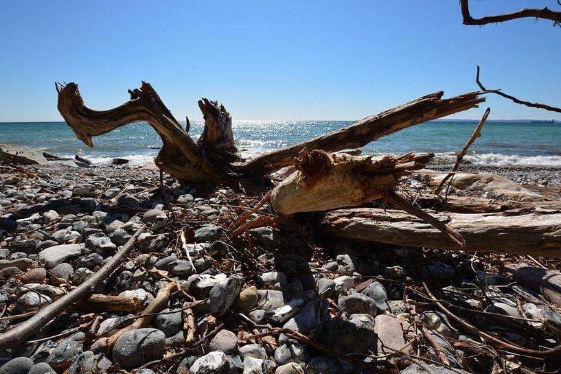Baumstamm am Strand -  Stubbenkammer von GH Foto & Artdesign