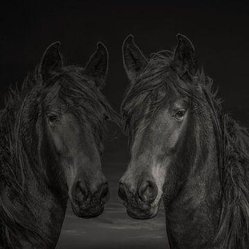 Chevaux, 2 chevaux de couleurs différentes sur Gert Hilbink