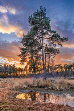 Bosrand en de bomen tot uiting in een vijver bij zonsondergang, Nederland