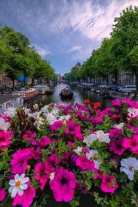Springtime in Amsterdam van