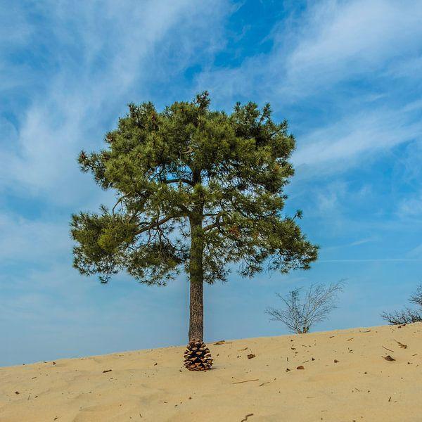 Nationaal Park De Loonse en Drunense Duinen van Freddie de Roeck