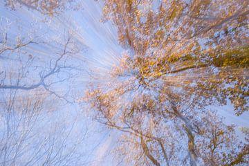Stralen in de herfst van Barbara Brolsma