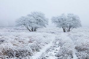 Wit berijpt landschap van