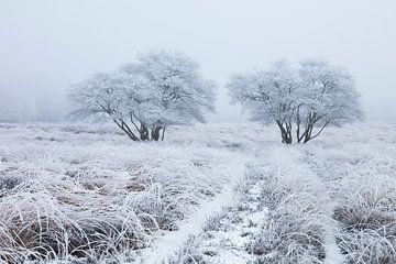 Wit berijpt landschap von Karla Leeftink