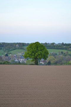 deze boom staat helemaal alleen in het limburgse landschap van