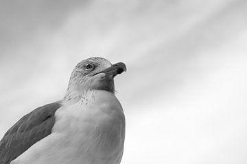 Portrait of Gull sur Luis Fernando Valdés Villarreal Boullosa