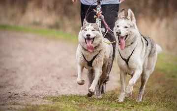 Honden van Hamperium Photography