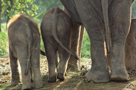Olifanten in Nepal van Gert-Jan Siesling