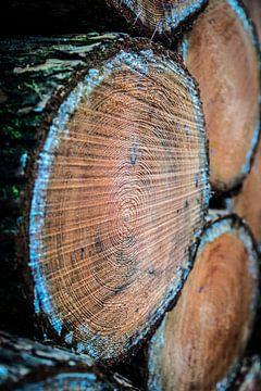 Timber van