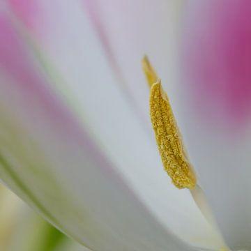 detail bloem van Maura Klumper