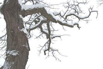 Winterboom van Jessica van den Heuvel