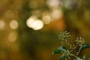 Herbst von Patricia van Nes