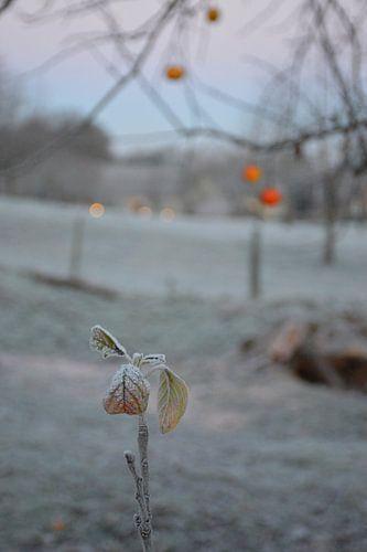 winter op het platteland van