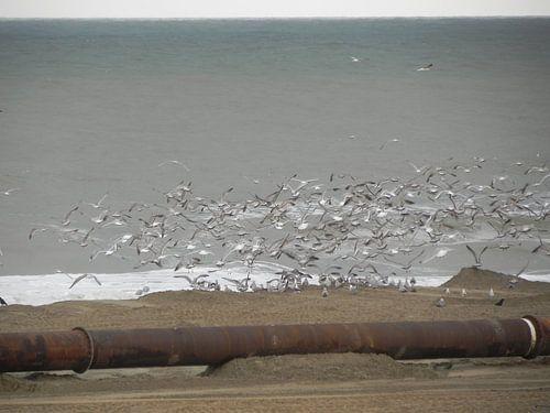 Vogels langs de kust tijdens zand opspuiten van het strand