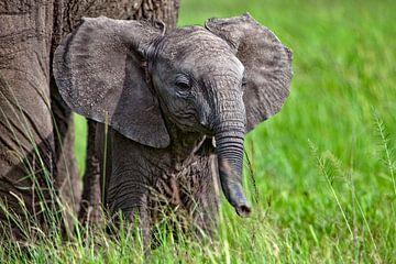 Babyelefant von Peter Michel