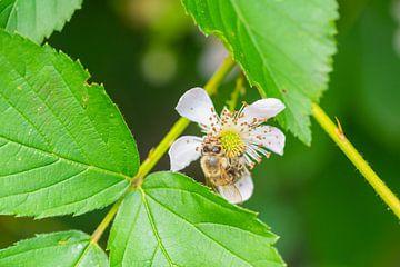 bloemen, bijen en vele andere kleine wezens van Matthias Korn