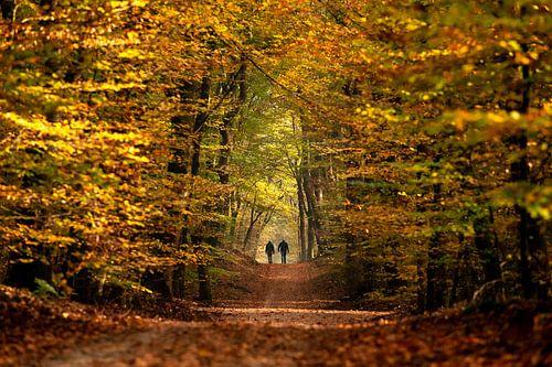 Wandelen in een sprookjes herfst bos