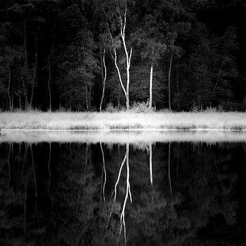 Birkenbaum von Robert Smit