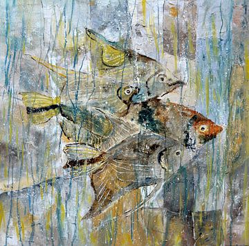 Kaiserfisch von pol ledent
