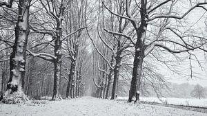 Beukenlaan in de sneeuw, Chateau Marquette