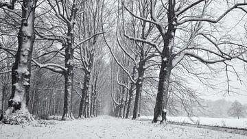 Beukenlaan in de sneeuw, Chateau Marquette van Paul Beentjes