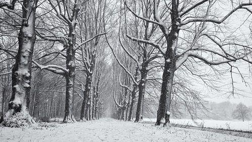 Beukenlaan in de sneeuw, Chateau Marquette van