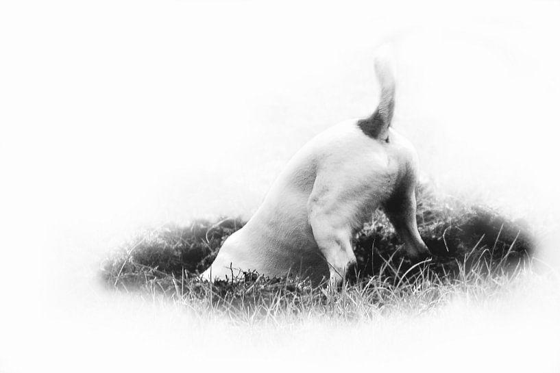 Jack russel, zwart wit van Aafke's fotografie
