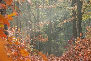 herfstbos van Nancy van Verseveld