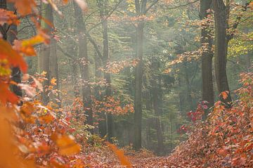 Herbstwald von Nancy van Verseveld