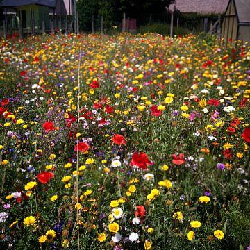 Wilde bloemen in een verlaten tuin. Zomer 2017. van Deborah Blanc