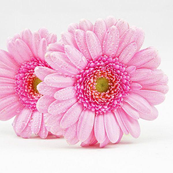 pink fantasy van Dirk van Egmond