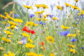 Vrolijk gekleurd veld wilde bloemen met klaproos van Caroline van der Vecht