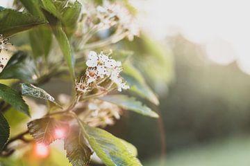 Blume in Blüte von Yvette Smink