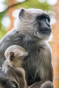Affenbaby mit Mutter von Jayzon Photo