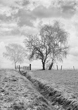 Misty Winterlandschaft mit einem Graben und Bäumen in einem Feld von Tony Vingerhoets