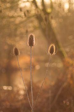 Ein schöner Winternachmittag (vertikal) von Birgitte Bergman