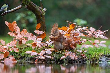 rode eekhoorn van gea strucks