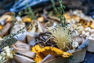 Pilzsammlung auf der Marke von Joost Potma