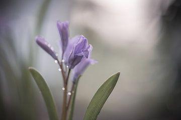 Blumen Teil 76 von Tania Perneel