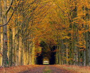 Herfst in het bos van Agnes Schuiterd