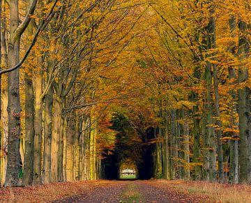 Herfst in het bos von Agnes Schuiterd