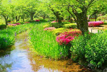 Japanse tuin riviertje van