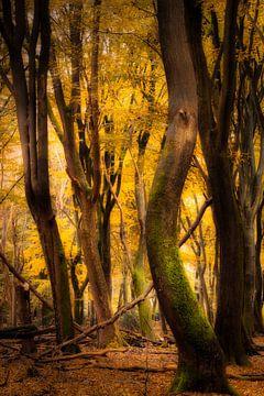 Tanzende Bäume im Herbst von Jamesrl Photography