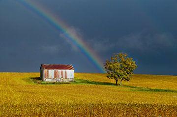 Regenboog boven goud-geel Canadees bonenveld van Sandra van Kampen